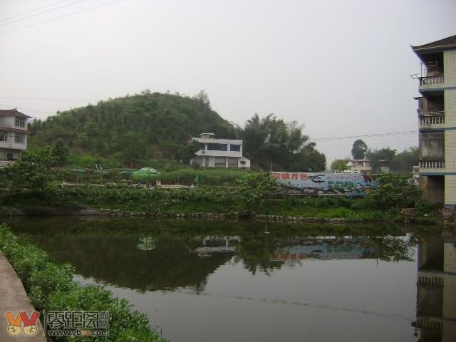 前往四川宜宾临港下江北凉姜桃花岛方向一钓鱼休闲,季节盛
